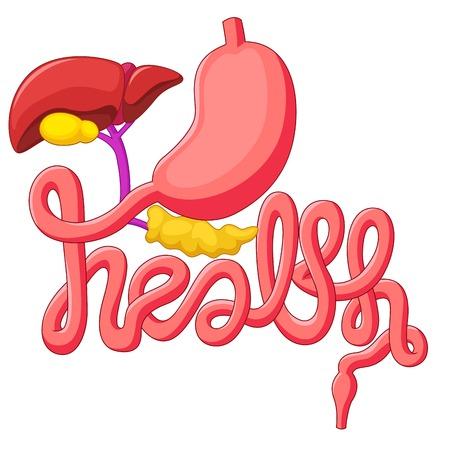glands: Health campaign symbol human digestive system