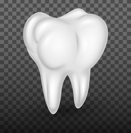 molar: Human molar teeth realistic on transparent background