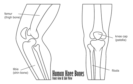 osteoarthritis: Human knee bones front and side view anatomy