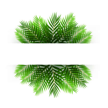 coconut leaves: Green coconut leaves floating with text space