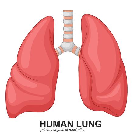Human Lungs respiratory cartoon Illustration