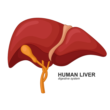bile: Human liver cartoon