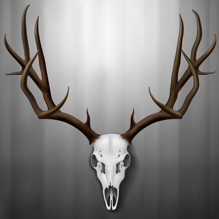 Realistic Deer Skull and antlers hanging on wall, Vector Illustration Illustration