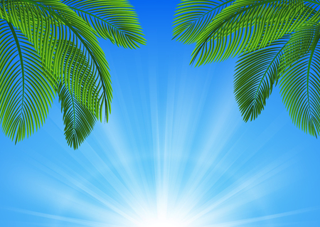 scenery of blue sky and coconut leaves