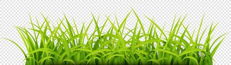Sign with text space of Young Grass. Suitable for nature concept, spring, and summer holiday. Vector Illustration 版權商用圖片 - 145942184