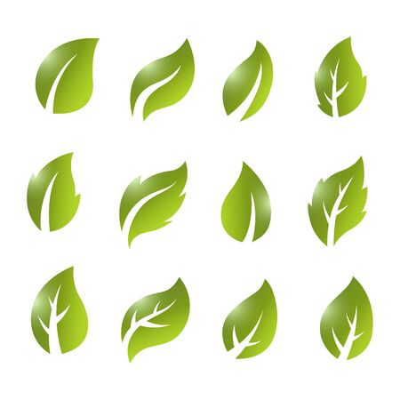 Artistic collection of green leaves set. Vector Illustration 版權商用圖片 - 145942527