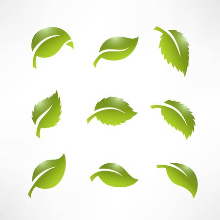 Artistic collection of green leaves set. Vector Illustration