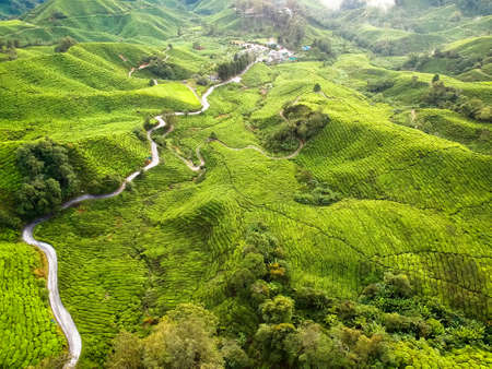 Aerial Photo - Birds eye view of the tea farm after harvest at morning. Stock Photo