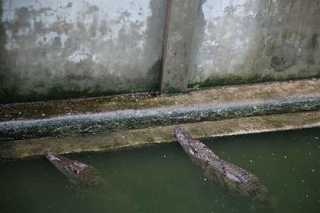 Crocodile Farm in Cambodia