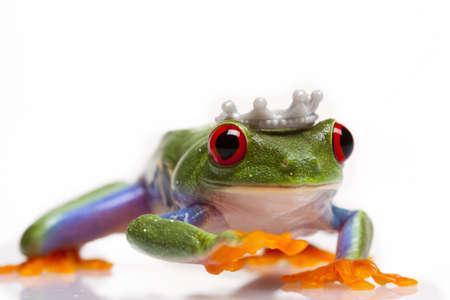 Frog Princess Stock Photo - 6225139