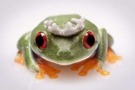 redeyed tree frog: Frog Princess