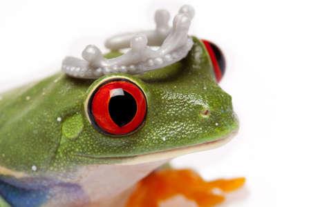 the frog prince: Ritratto di Frog Prince