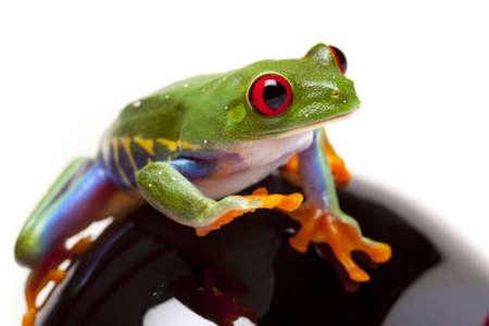 callidryas: Walking Frog!