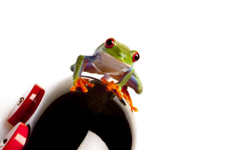 red eyed tree frog: Frog Driver isolated Stock Photo