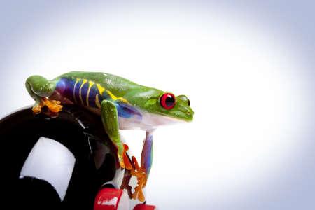 Looking Frog