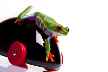 callidryas: Frog and Toy