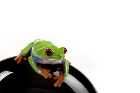 callidryas: Sitting Frog
