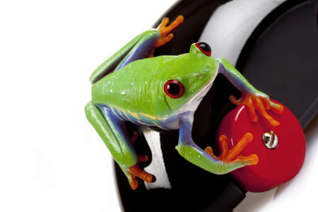 red eyed tree frog: Frog Driver