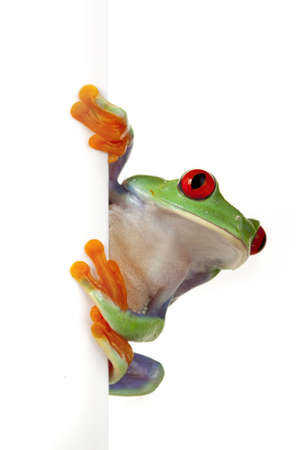 Frog on Board Stock Photo - 6235854
