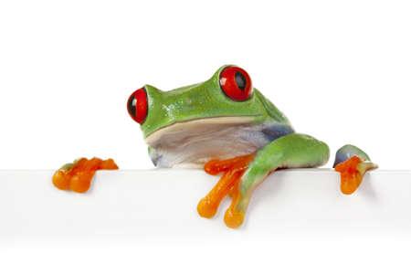Frog aan boord