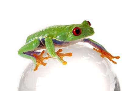 Frog on Globe photo