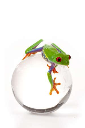 eyeing: Frog on Globe