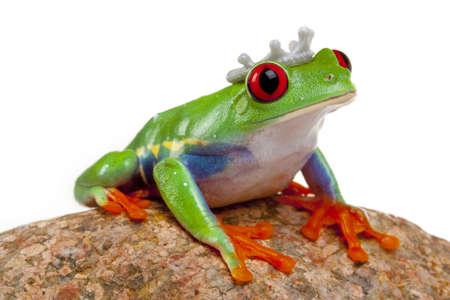the frog prince: Frog Prince  Archivio Fotografico
