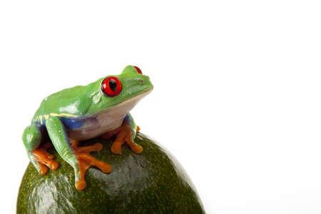 Fruit Frog photo
