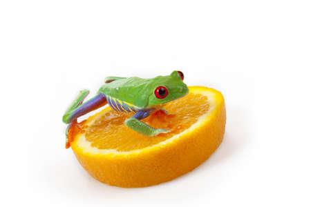Orange Frog photo