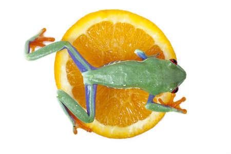 red eyed tree frog: Juicy Frog