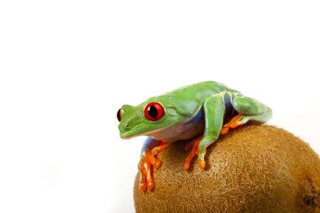 Kiwi Frog photo