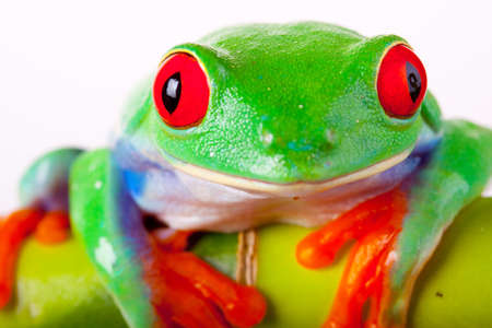eyeing: Frog Portrait Stock Photo