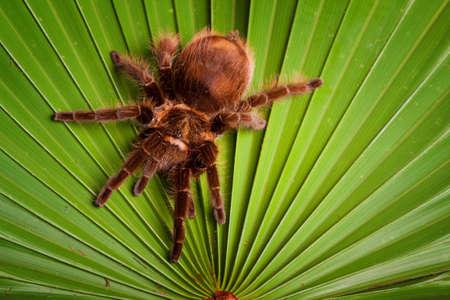 Spider on Leaf photo