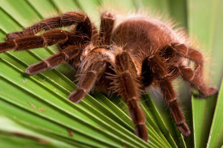 Big Tarantula Stock Photo - 6368391