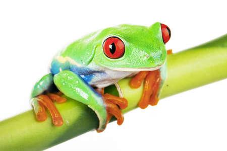 Kikker en bamboe