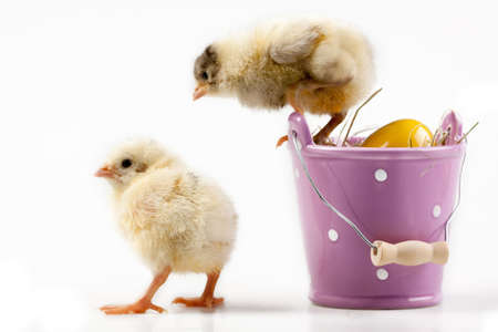 Easter Chickens Stock Photo - 6393742