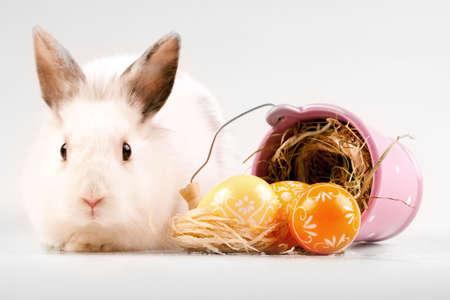 conejo pascua: Concepto de conejo de Pascua