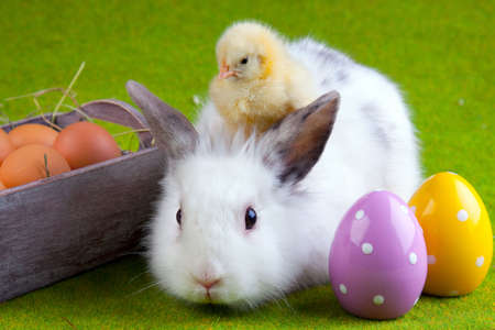 Easter Concept Stock Photo - 6412774