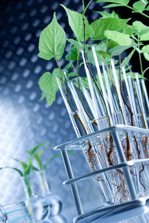pharmaceutic: Green seedling laboratory Stock Photo