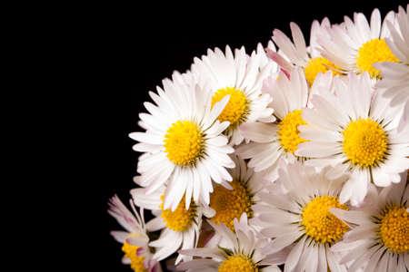 daisys: Daisys