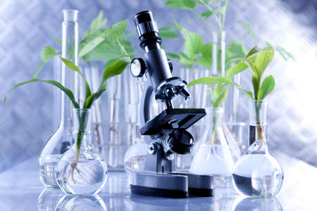 biological science: Seedling laboratory Stock Photo