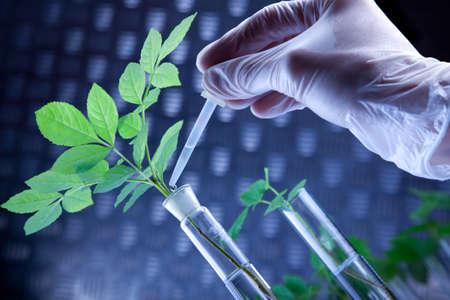 modify: Scientist and plant Stock Photo