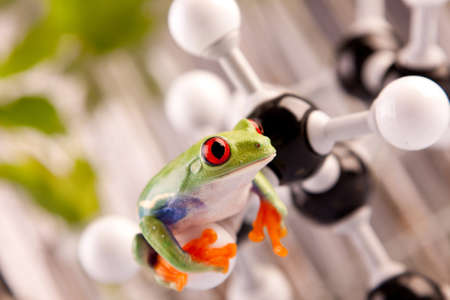 Frog in lab photo