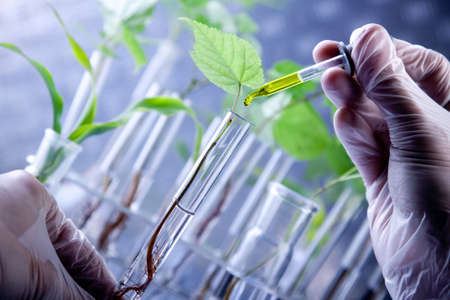 lab test: Scientist and plant Stock Photo