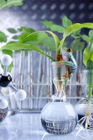 wijzigen: Laboratorium en planten  Stockfoto