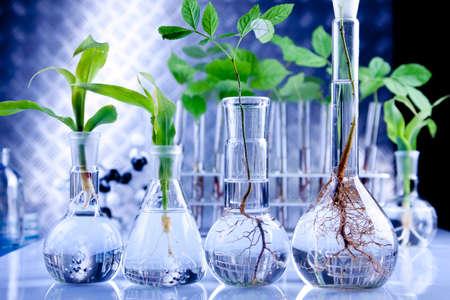 modificar: Plantas de semillero en laboratorio