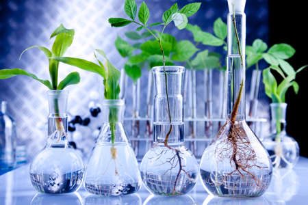 chemical laboratory: Seedlings in lab