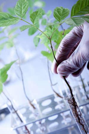 examine: Scientist examine plants Stock Photo