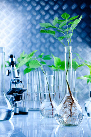 Green Seedling laboratory Stock Photo