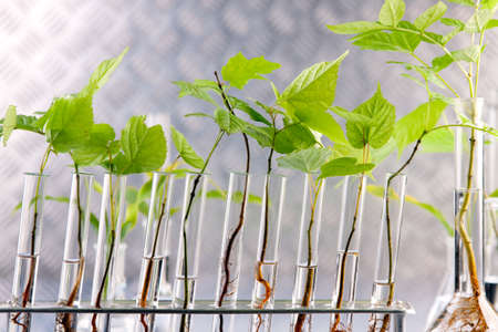 Scientist holding pipette over seedlings photo